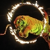 Цирки в Кокошкино