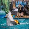 Дельфинарии, океанариумы в Кокошкино